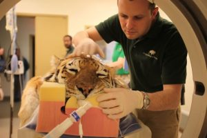 Dr. Mike Adkesson And Tiger