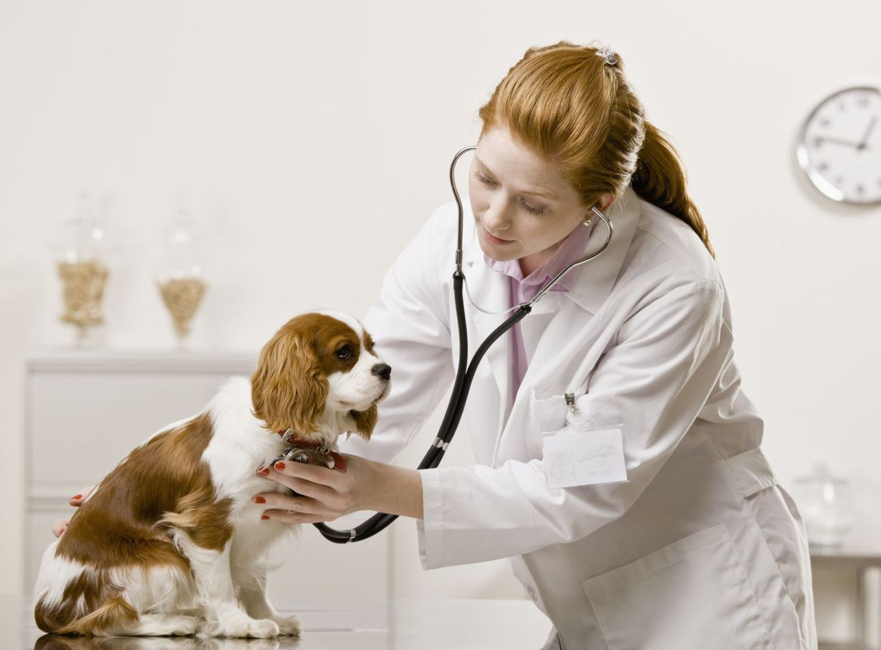 Doctor Checking the Dog